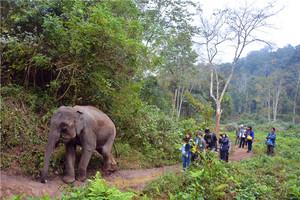野象谷保护区雨林象道探险考察一日游