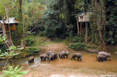 穿越野象谷保护区(经典的一天徒步线路)