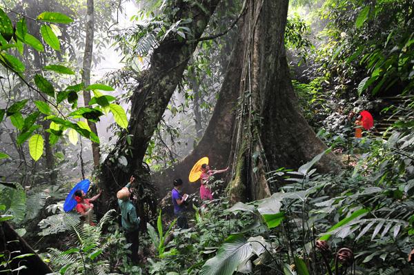 雨林文化深度体验游:(玩点:雨林、野餐、树降、沙雕、捕鱼、篝火露营);